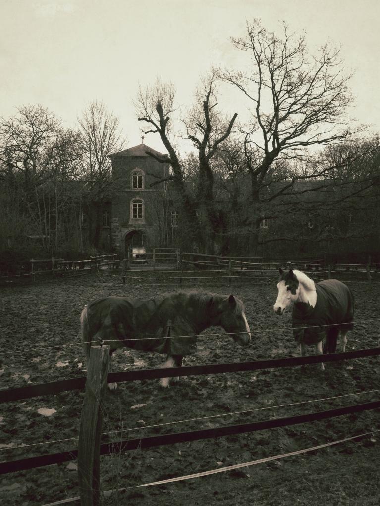 Horses in Aachen