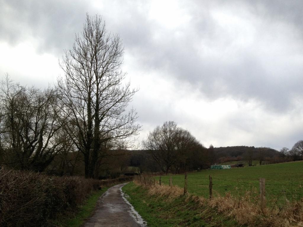 Walking path through a field