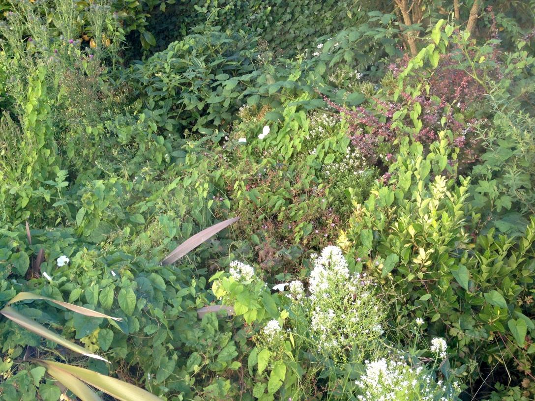 2014-07-08 garden
