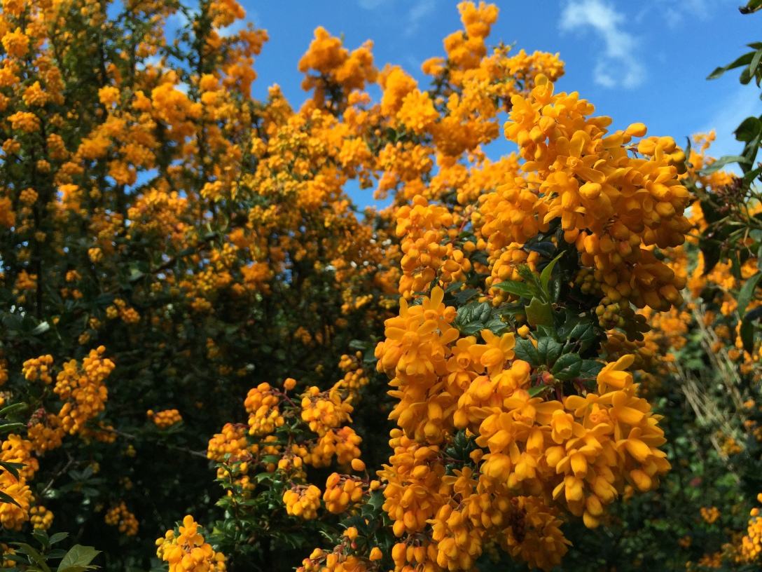 Tree with orange flowers