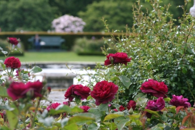 Roses on the terrace