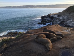 Chilling in La Jolla