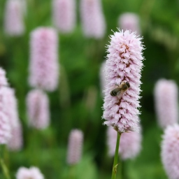 Bodnant Garden in the Spring